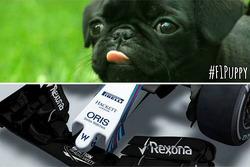 Lotus pokes fun at Williams new aero design